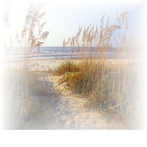 sea oats on Isle of Palms